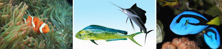 海水魚技術示意圖
