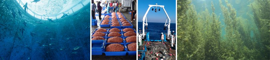 漁業資源調查照片