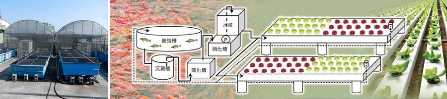 友善生態環境養殖模式圖