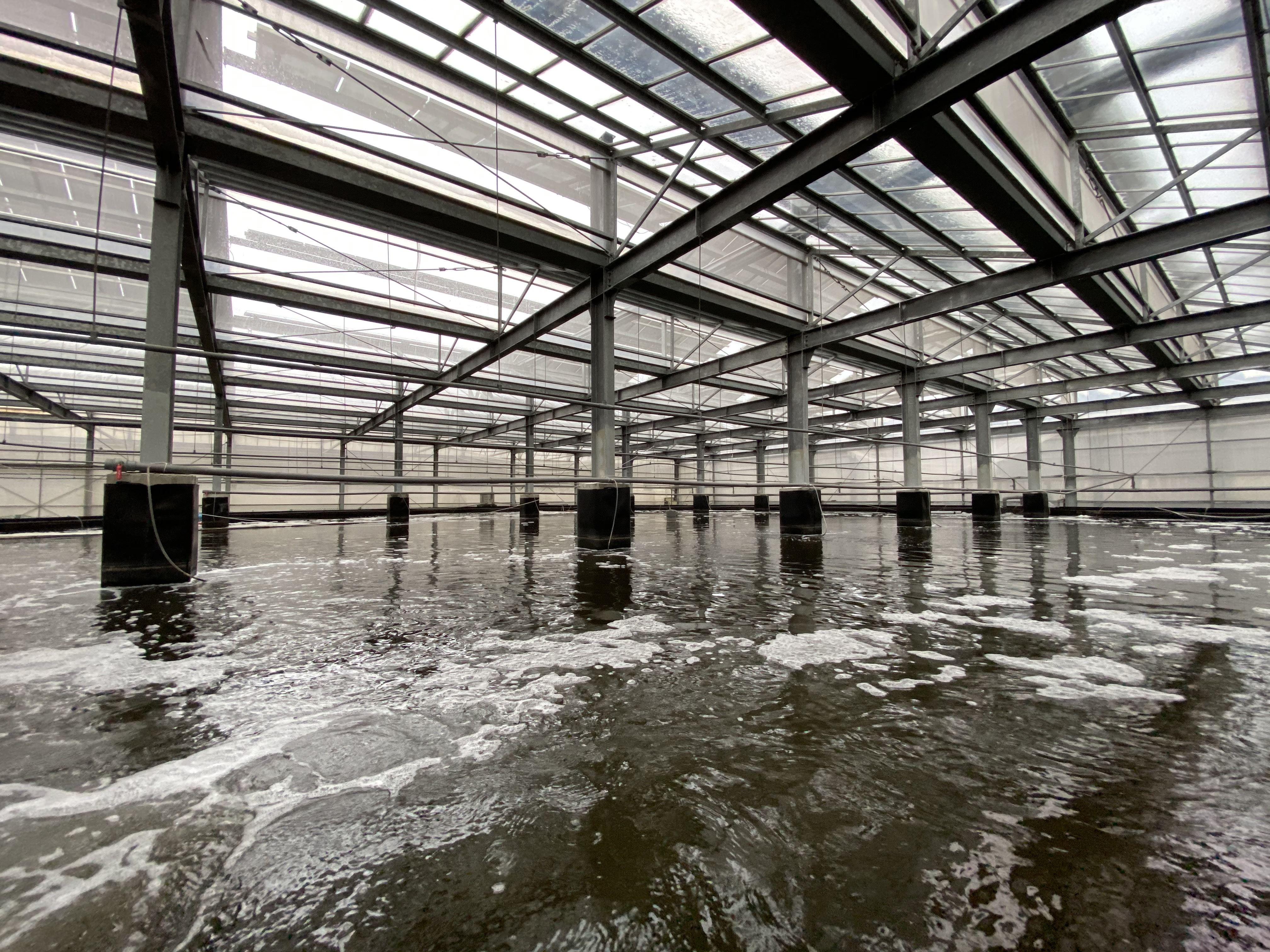 向陽公司的光電SPF白蝦養殖殖設施