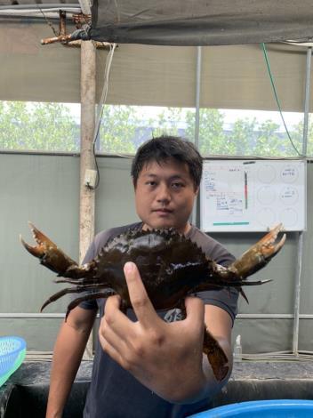 種蟹培育-沙母