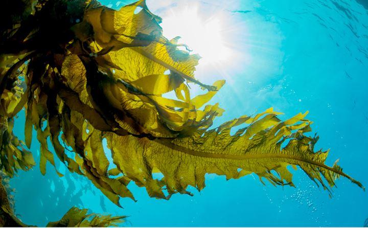 海藻主題館