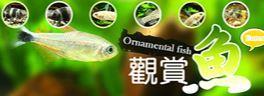 觀賞魚網站